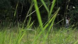 Rebecca on Grass screen cap #3